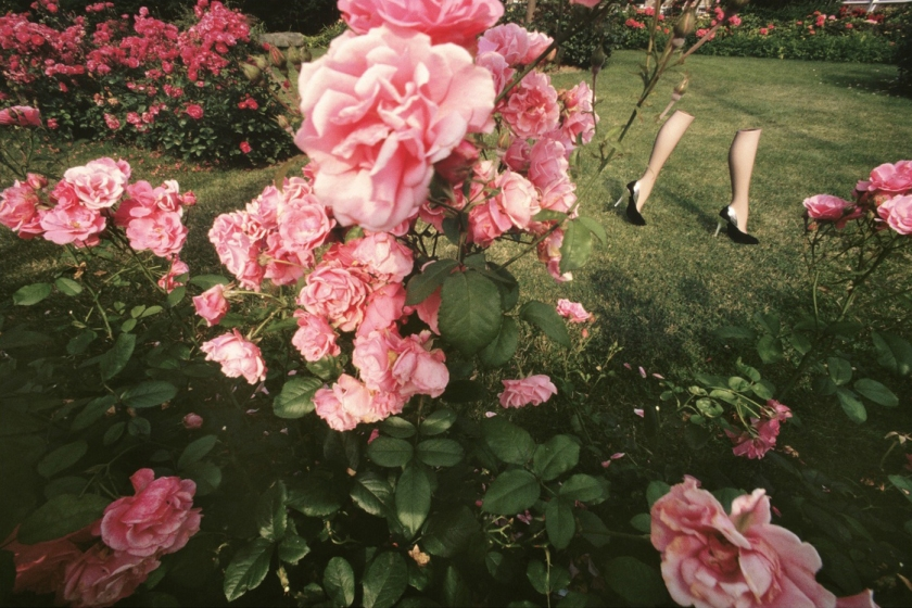 gb_rose