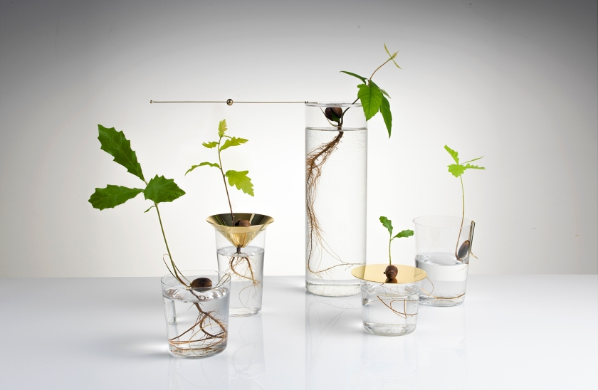 Floating Forest Series
