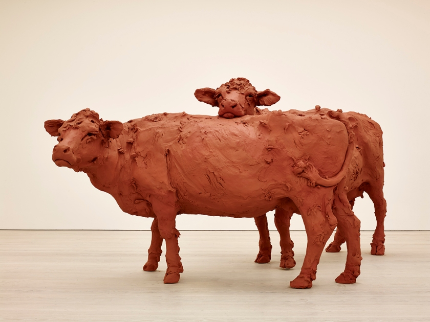 Stephanie Quayle, Two Cows, 2013. Image courtesy of the Saatchi Gallery, London